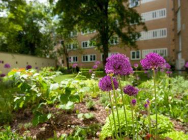Bepflanzung von Wohnanlage